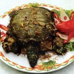 Về Cà Mau ăn rùa rang muối